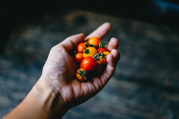 Vendita di prodotti alimentari online: requisiti e adempimenti